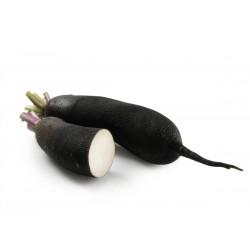 Radis noir long bio